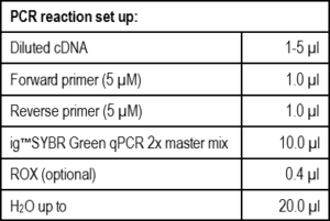 sybr-green-pic-1