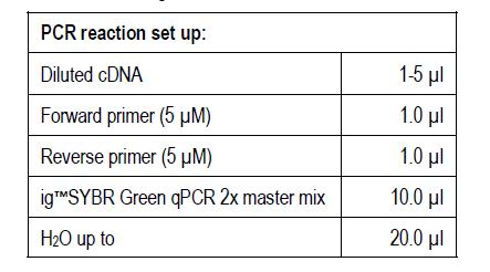 SYBR Green qPCR setup
