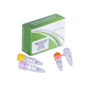 igScript First Strand cDNA Synthesis kit