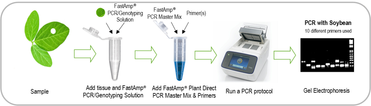 Fastamp Plant Direct PCR How to