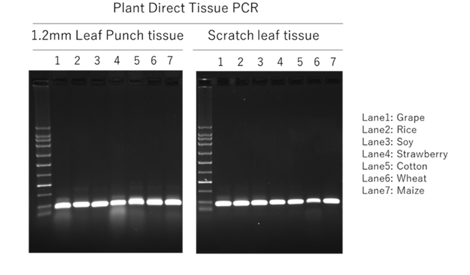 Plant Direct PCR QC
