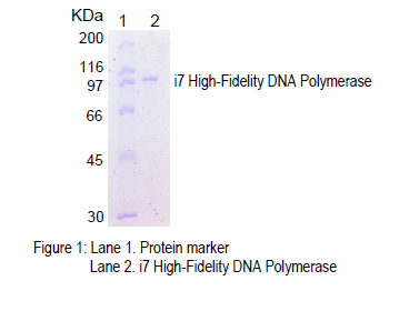 High Fidelity DNA Polymerase Purity