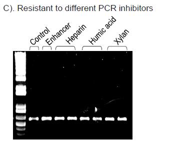 Hot Start High Fidelity DNA Polymerase I7 PCR Inhibitor