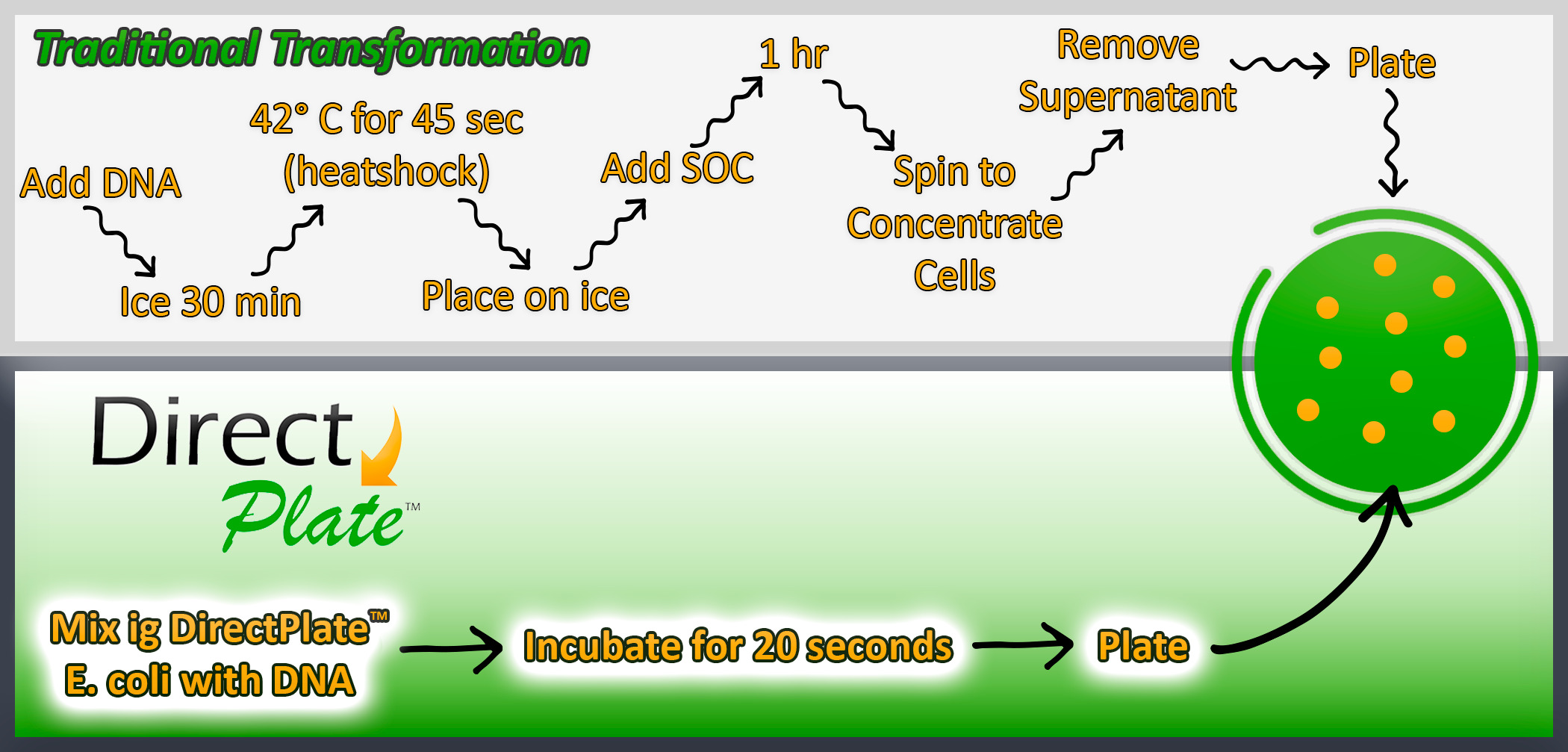 DirectPlate 5-alpha chemically competent cells Protocol Comp