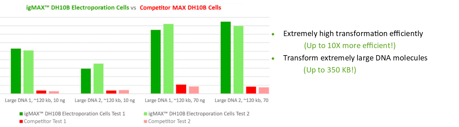 Electrocompetent Cell Transformation Efficiency